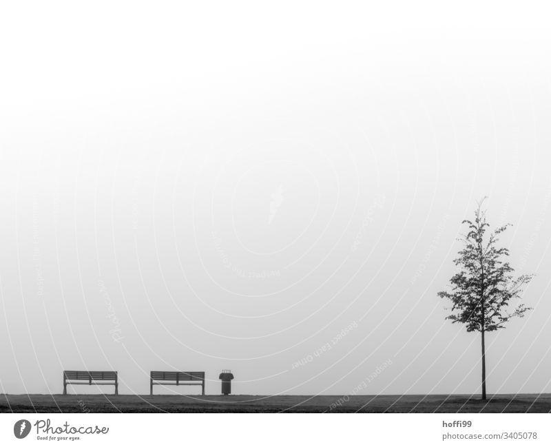 Stillleben mit Bank Mülleimer Baum und Nebel Sitzbank abfallbehälter junger baum schlechtes Wetter trist Außenaufnahme Einsamkeit Müdigkeit stagnierend nass