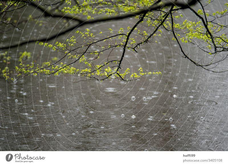 nasser Frühling im Park Pflanze schlechtes Wetter Blüte Baum Regen frisch Frühlingsgefühle natürlich hell Vorfreude Duft ästhetisch Schönes Wetter Natur