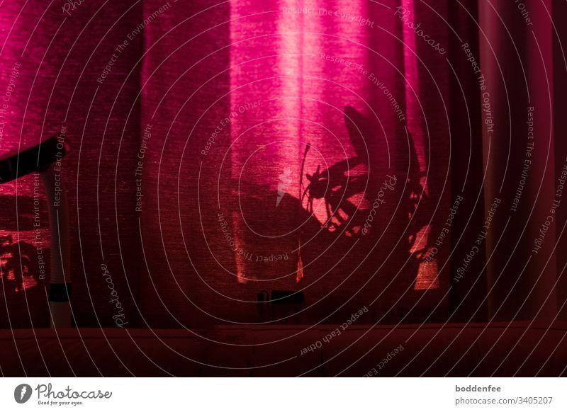 Morgensonne durch Vorhang rot Fenster Stoff Licht Tag Falte menschenleer