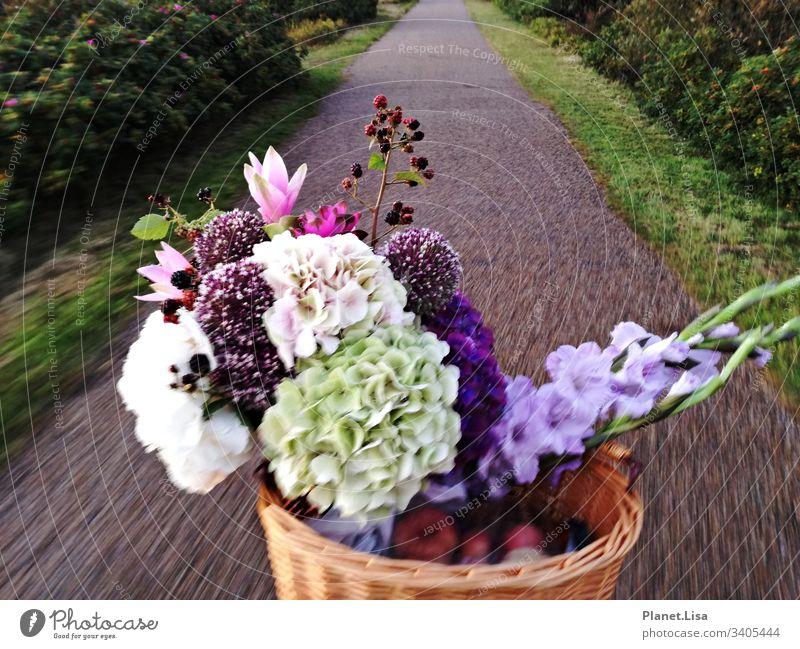 mit dem Fahrrad unterwegs Straße Blumenstrauß Hortenstien Außenaufnahme Farbfoto Pflanze Natur Duft mehrfarbig Bewegung Blüte Blühend Menschenleer rosa Äpfel