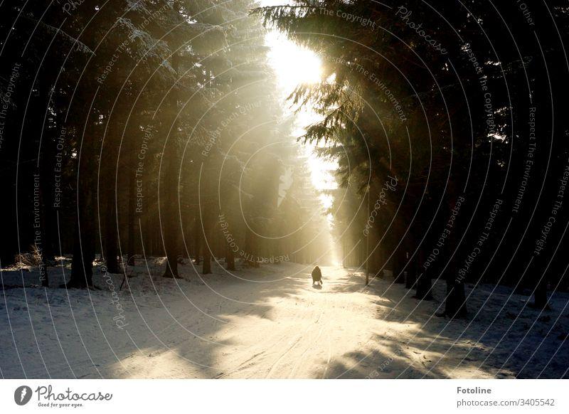 Winterwunderland - oder Die Sonne bricht durch die dunklen  Bäume und erleuchtet die wunderschöne Schneelandschaft durch die ein Schlittenfahrer rodelt. rodeln