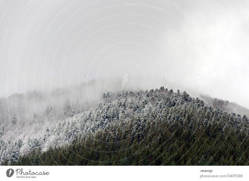 Schneefallgrenze Winter Baum Wald kalt Winterurlaub Eis Frost Wetter Klima Umwelt Natur Landschaft Wolken Nadelbaum Nadelwald Schwarzwald