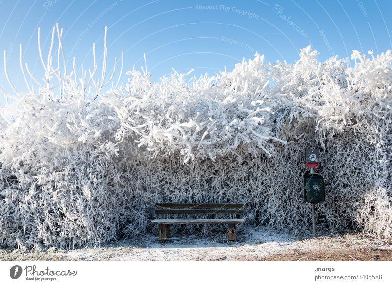 Frierende Bank Schnee Winter ruhig friedlich Erholung Natur Landschaft Eis Frost kalt Klima Umwelt frieren Busch Hecke Blauer Himmel Schönes Wetter