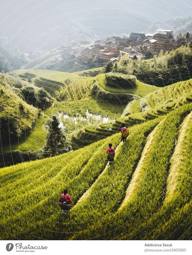 Grüne Reisfelder am Hang Feld Terrasse Hügel grün Landschaft Natur Tal reisen longsheng ländlich Ackerbau malerisch Gras Sommer Bauernhof Schonung Tourismus