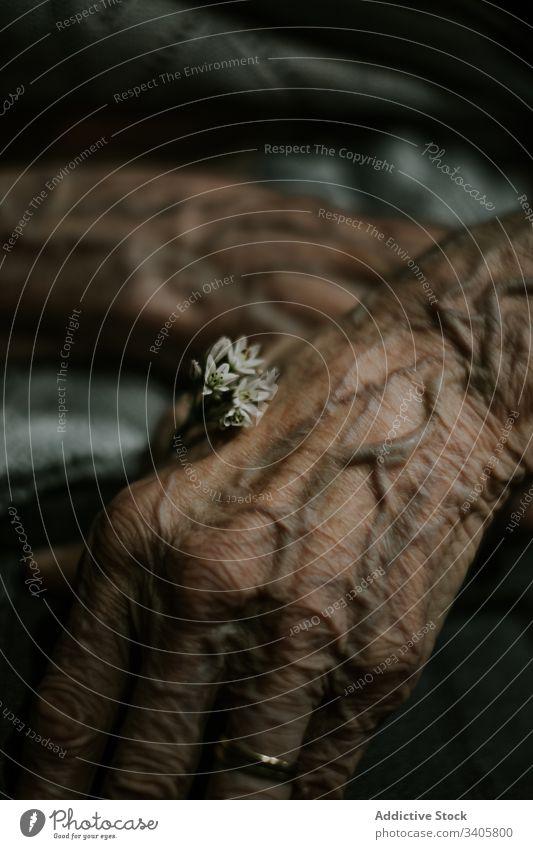 Ältere Person mit winziger Blüte kupieren älter Blume Hautfalten Leben Angebot Vene Blütezeit Hand frisch natürlich Pflanze Pflege gealtert Senior