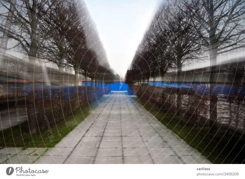 Sog |Allee im Zoomeffekt Bäume Hecken Platten Betonplatten Weg Wand blau Gras grün Zentralperspektive Fluchtpunkt Symmetrie Außenaufnahme Wege & Pfade
