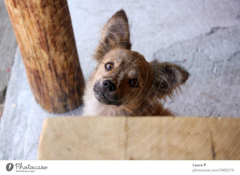 Nahaufnahme des Kopfes eines streunenden Hundes mit großen Augen, der in die Kamera schaut abschließen pelzig Tier Haustier heimisch jung niedlich lustig süß