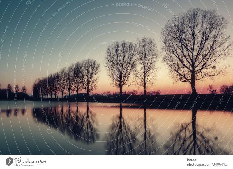 Kahle Baumreihe mit Wasserspiegelung Böschung Rhein Natur Fluss Abend Himmel Sonnenuntergang See ruhig Pappeln Erholung Wolken Allee Abenddämmerung kahl