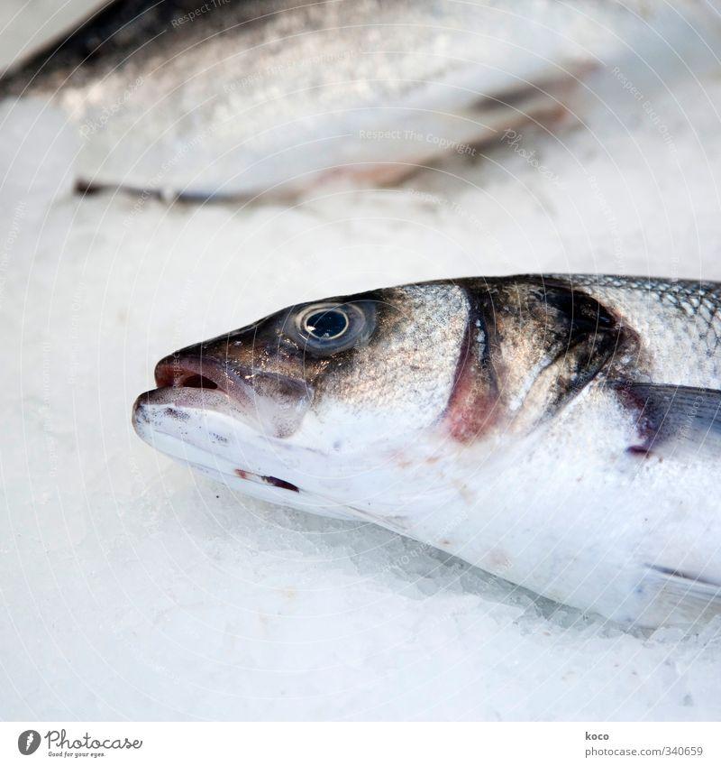 Fisch Ernährung Fischmarkt Fischmaul Fischauge Schuppen Wasser Tier Totes Tier Tiergesicht 2 lecker braun grau rosa schwarz weiß Traurigkeit Tod Schmerz Trauer