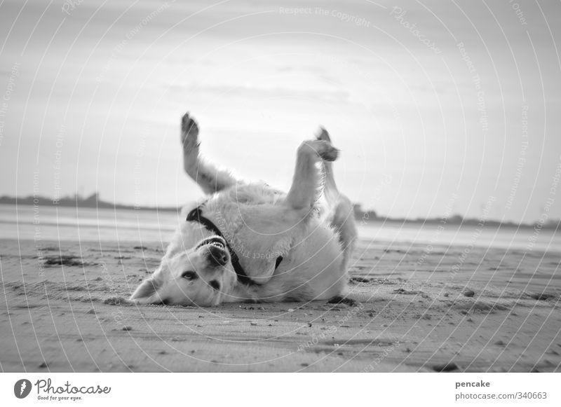 naiiin, ich bin nicht verrückt! Natur Landschaft Urelemente Erde Sand Wasser Himmel Horizont Sommer Strand Tier Hund 1 Zeichen Gefühle Freude Glück Fröhlichkeit