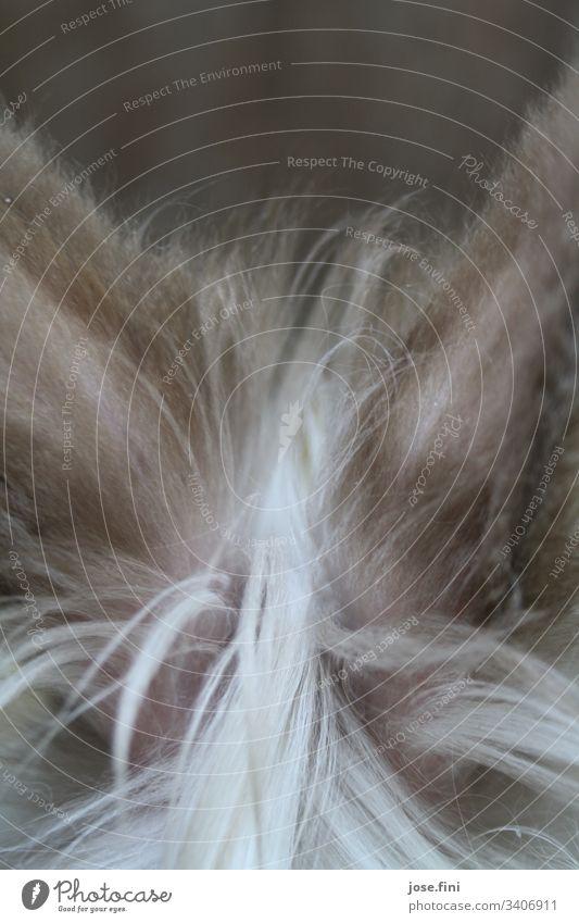Hasenohren des Mümmelmanns von hinten, mit kuschligem Flaum Hase & Kaninchen Fell braun grau Haustier Nutztier Tierporträt weich ausschnitt Hasenlöffel