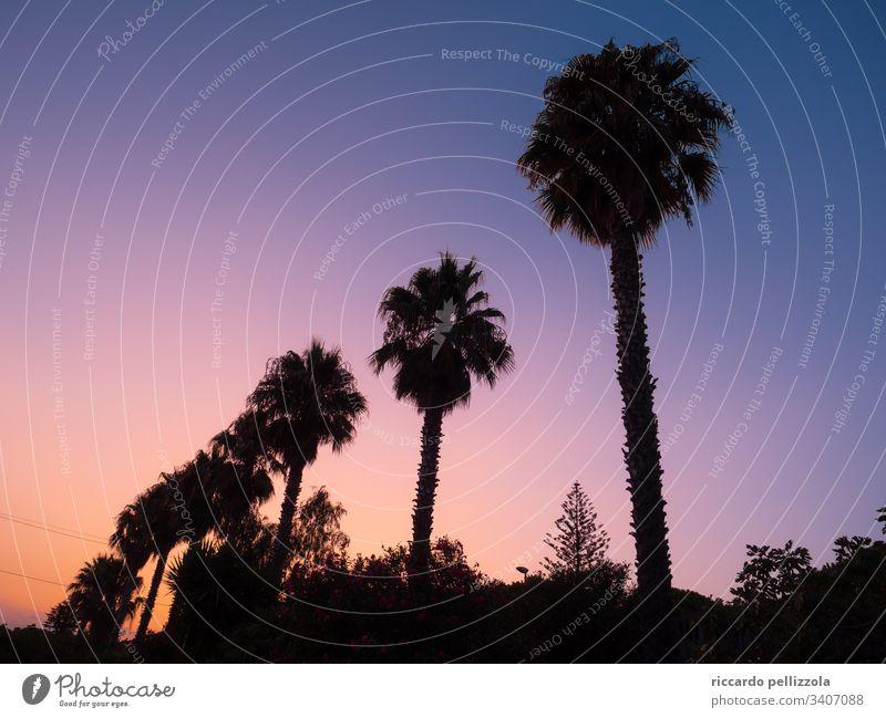 Palmen bei Sonnenuntergang Silhouette rot purpur Abend blau Himmel Schatten Stimmung Melancholie Sommer Sommerzeit Farbfoto Kontrast Licht Gegenlicht Landschaft