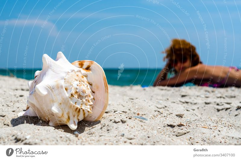 große Meeresmuschel auf dem Sand vor dem Hintergrund eines rothaarigen Mädchens, das sich am Strand sonnt große Muschel blau Unschärfe übersichtlich Küste Tag