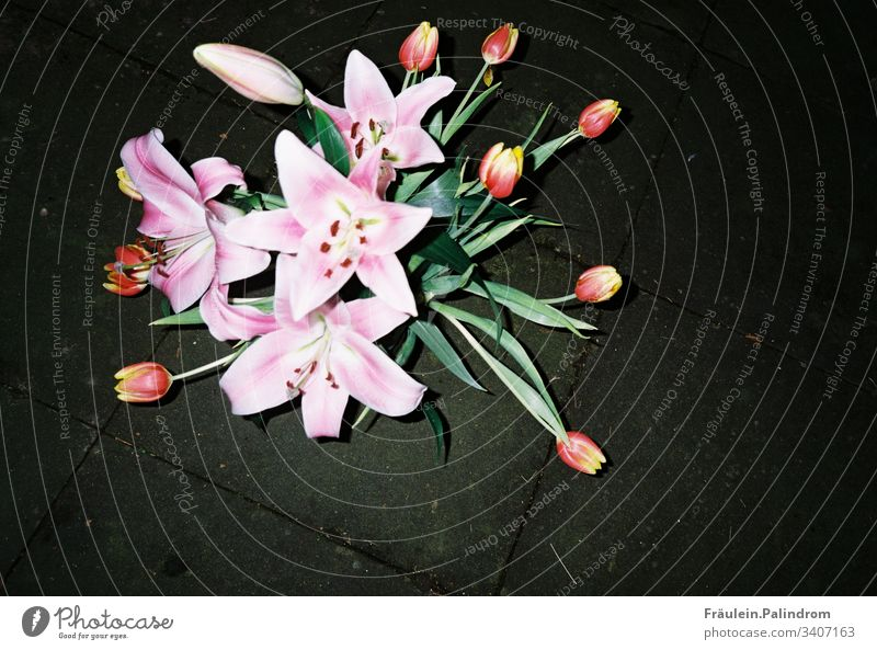 Lilien und Tulpen tulpe blume strauß blumenstrauß blitz licht dunkel nacht blitzlicht analog analogefotografie frühling ostern märz april blüte rosa pflanze