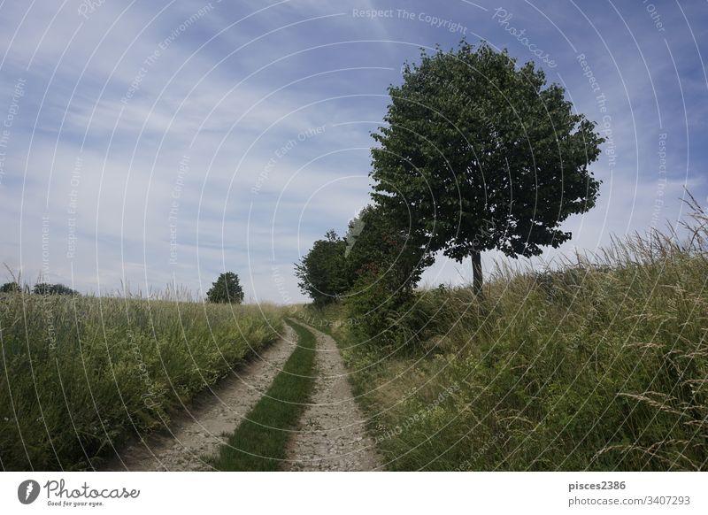 Idyllischer Pfad durch Felder mit Bäumen am Wegesrand und blauem Himmel gold Schweiz Deutschland Europa Landschaft sächsisch wunderschöne Landschaft wandern