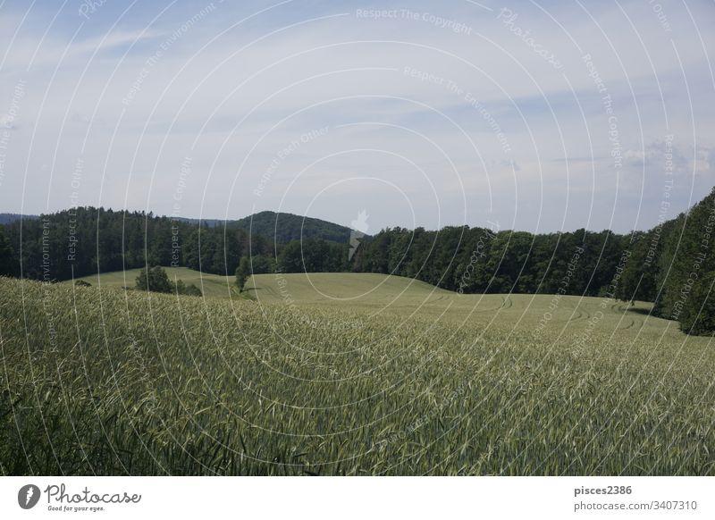 Wunderschöne Landschaft in der Sächsischen Schweiz mit Kanzelberg gold Feld Deutschland Europa sächsisch Sächsische Schweiz wunderschöne Landschaft wandern
