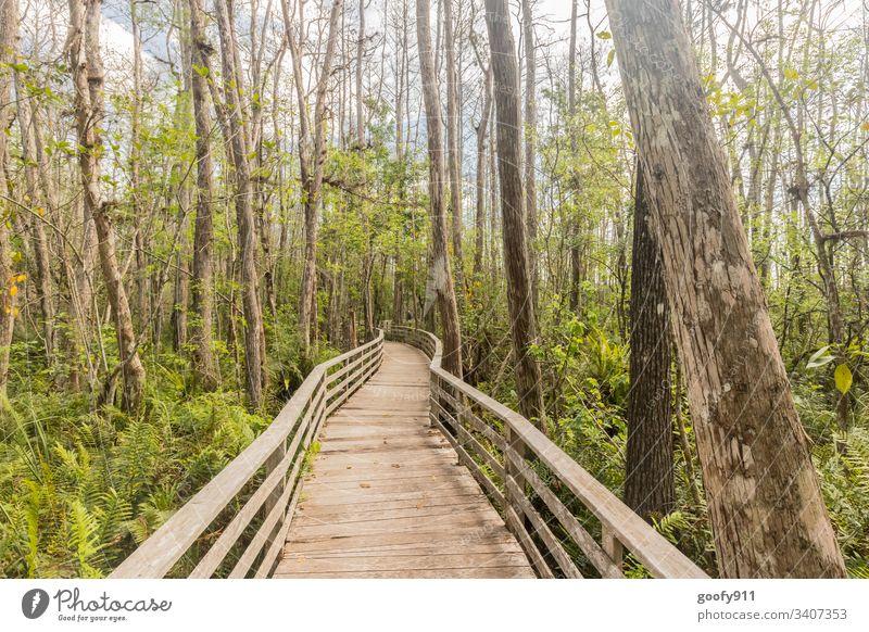 Mitten drin Wald Sumpf Baum Steg Natur Landschaft Außenaufnahme ruhig Pflanze Umwelt Sträucher Licht grün Schatten Farbfoto Sonnenlicht Idylle Florida