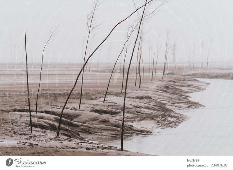 Pricken an Fahrrinne bei Ebbe und Nebel Pfahl Siele Nebelschleier Nebelfeld Nebelstimmung Nebelwand Himmel Nordsee Außenaufnahme Meer Küste Hafeneinfahrt Natur