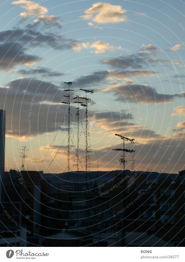 Antennenhocker Sommer Vogel Horizont Aussicht Dach Abenddämmerung