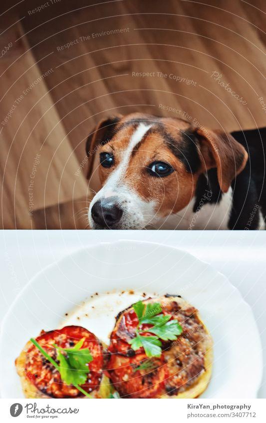 Süßer hungriger Welpe schnüffelt am Essen des Besitzers auf dem Teller, lustiger Moment, Draufsicht Hund Lebensmittel Haustier Gesundheit heimisch Mahlzeit