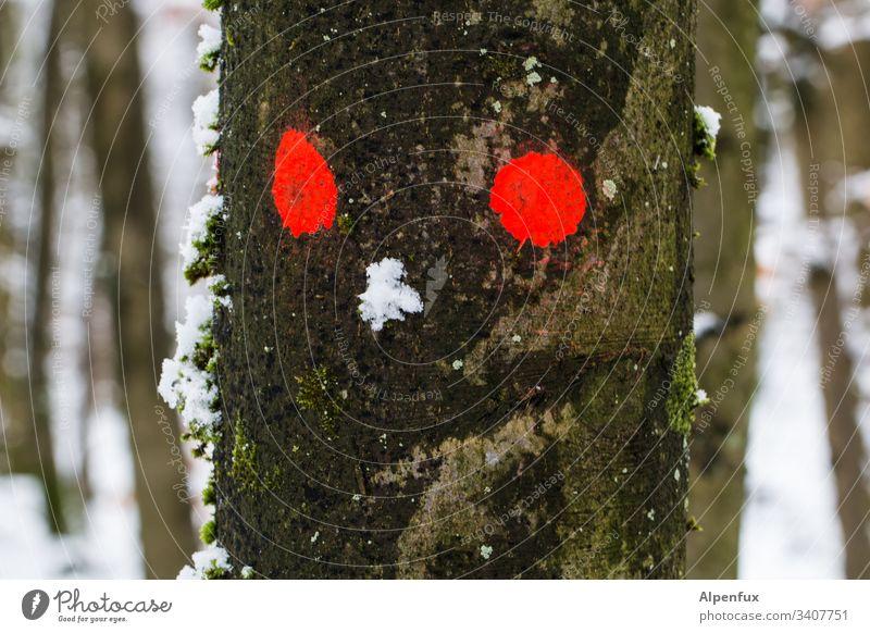 Anzeichen von erhöhtem Drogenkonsum Wald Baum Natur Rote Augen Schnee Winter kalt Landschaft Außenaufnahme Farbfoto Frost Schneelandschaft Menschenleer Eis Tag