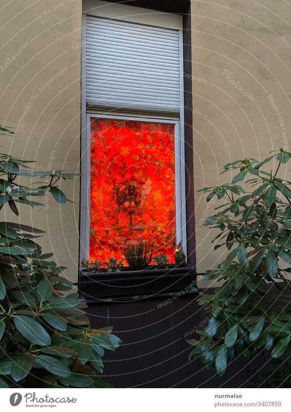 Rotes Fenster dekoration Fassade blumenkasten hinterhof trash hexe farbklex geheimnis rolladen glas idividualität kreativität leben wohnen blätter