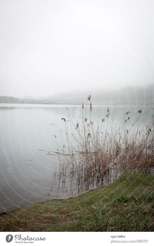 ein ruhiger tag am see Natur Wasser Landschaft Erholung Frühling See Nebel genießen Sauberkeit Gelassenheit Schilfrohr stagnierend