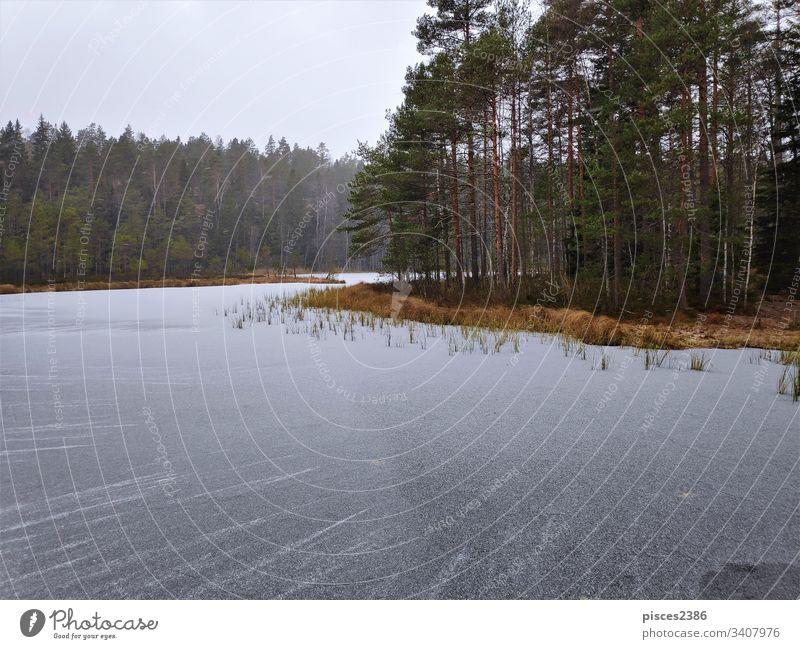 Gefrorenes Wasser vor der Insel im Haukkalampi-See gefroren Natur Himmel nuuksio blau Sonnenaufgang Finnland kalt Winter Eis weiß Wald espoo Hintergrund Schnee