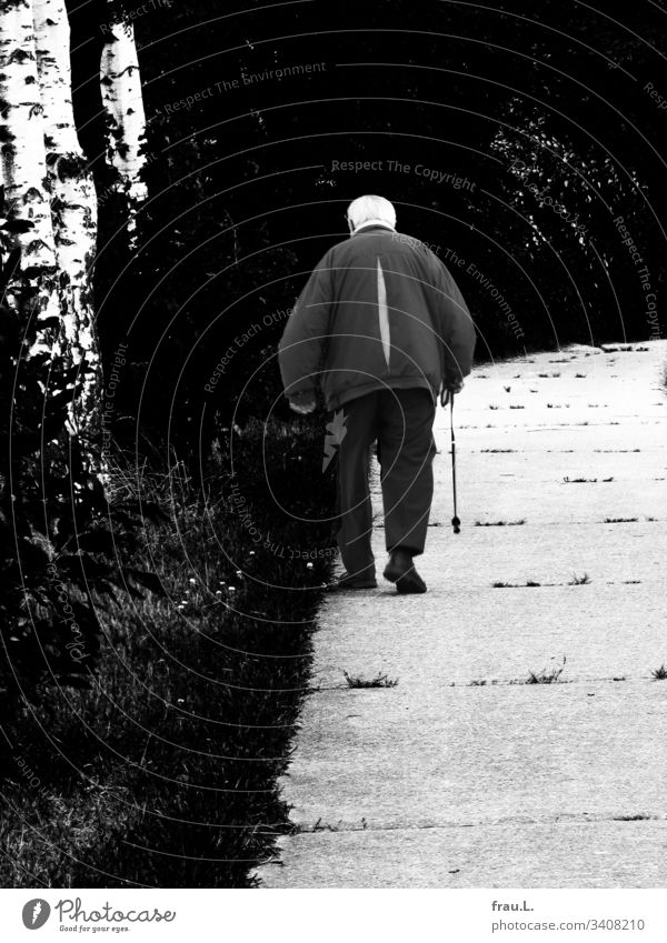 Da ging er hin, der alte Mann mit seinem Walking Stock, die Birken sahen ihm nach und hofften  auf ein Morgen mit ihm. Vater Außenaufnahme Weg Bäume Erwachsene
