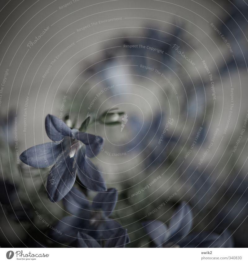 Fiorellino Natur Pflanze Einsamkeit Umwelt dunkel Traurigkeit grau Blüte klein natürlich Stimmung braun Idylle elegant Vergänglichkeit Trauer