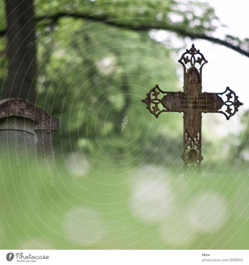 hier ruht.. Baum Landschaft ruhig Umwelt Wiese Wandel & Veränderung Vergänglichkeit Ewigkeit Unendlichkeit Ende Vergangenheit Verfall Kreuz Friedhof verlieren