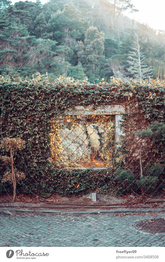 Ein Fenster an einer bewachsenen Wand Vegetation Natur Ruinen Stein Baum Umwelt Regie antik üppig (Wuchs) dicht Garten lang Weg magisch Nachlauf Frühling grün