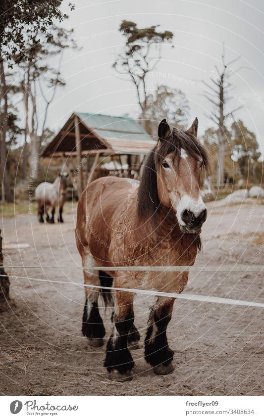 Braunes Pferd wartet auf einem Feld Pferdestall Licht Reiterin Kopf Bucht Reihe Gebäude Gate Scheune Fenster Verkaufswagen Ranch Boarding Kabelbaum Sattelkammer