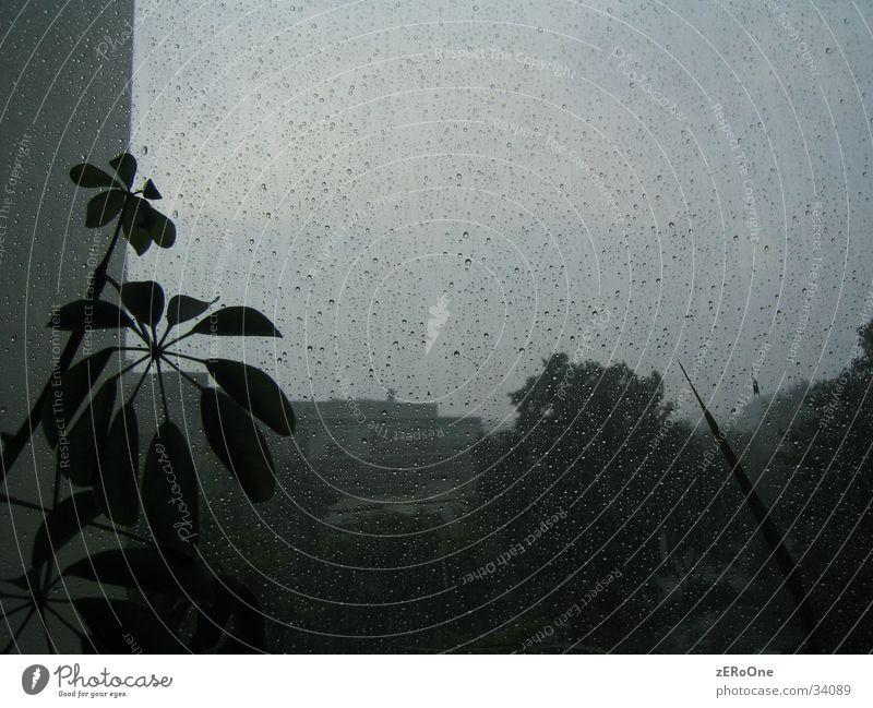 Rainy Days Pflanze Regen Wassertropfen nass Gewitter