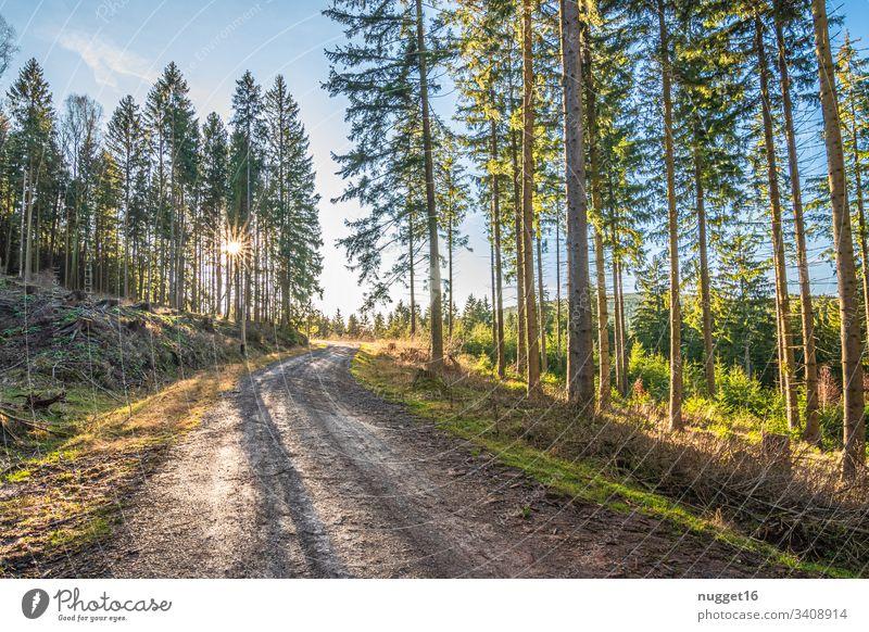 Waldweg im Abendlicht Sonnenlicht Außenaufnahme Natur Farbfoto Menschenleer Tag Schönes Wetter Baum Umwelt Pflanze grün Licht natürlich Herbst braun mehrfarbig