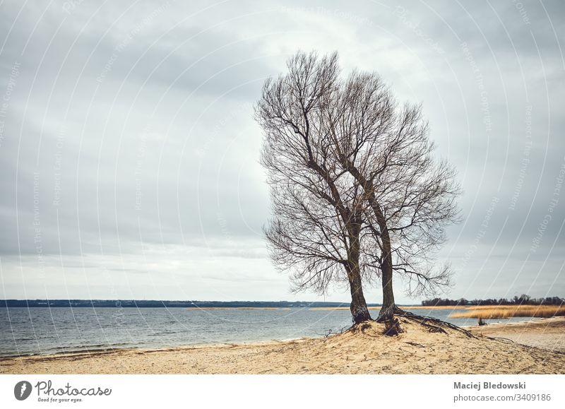 Zwillingsbaum an einem Strand, Farbabtönung aufgetragen. Baum Natur Landschaft MEER See wolkig Horizont Himmel Stimmung Nostalgie gefiltert retro altehrwürdig