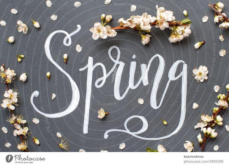 Frühlingsschriftzug mit weißen Blumen auf grauem Hintergrund romantisch Draufsicht Sahne oben Beschriftung Text Wort Handbeschriftung Blütenblätter Knospen