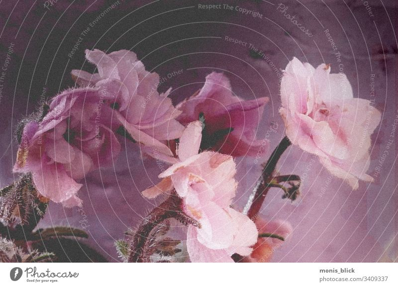 Blumen Fineart Ostern frühling Farbe bunt Blüte Blumenstrau´ß Osterzeit Nahaufnahme Feste & Feiern Farbfoto Design Tradition Frühling Postkarte Blatt