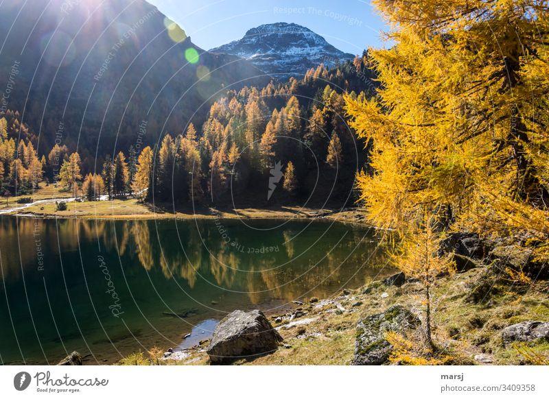 Stiller Bergsee im Goldenen Herbst See Gebirgssee Duisitzkarsee Seeufer Idylle Hoffnung herbstlich verträumt Farbfoto Lebensfreude mehrfarbig träumen Wald