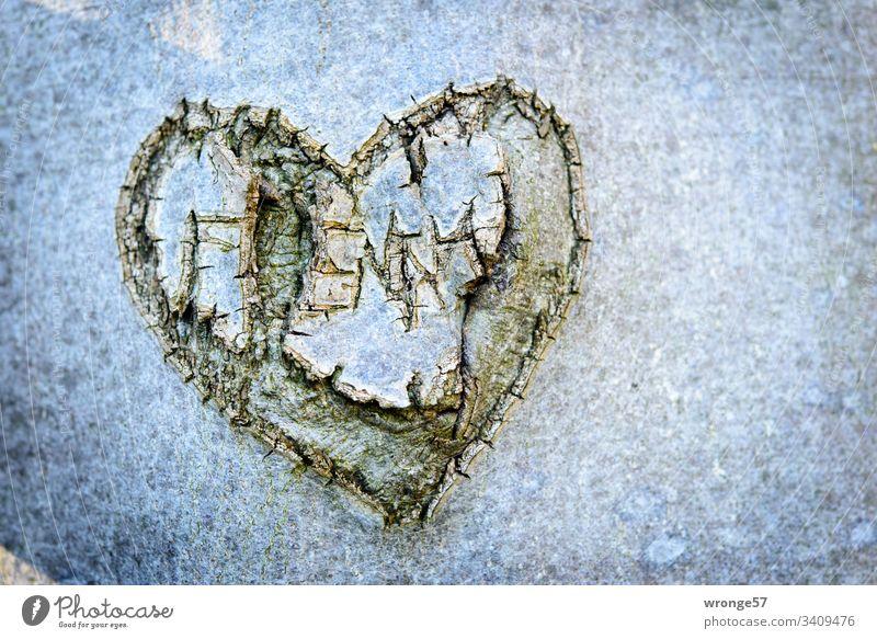 Rissiges Herz in die Rinde eines Baumes geschnitzt Liebe alte Liebe Baumstamm Borke schnitzen Schnitzkunst Wald Zeichen Außenaufnahme Farbfoto Holz Tag