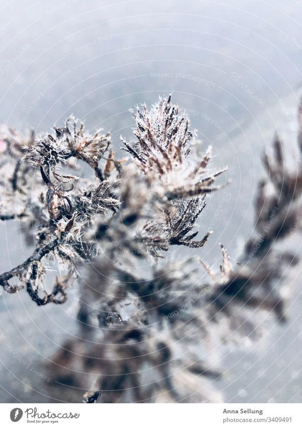 Struktur einer Pflanze in Spinnweben Natur texture Hintergrundbild Strukturen & Formen Detailaufnahme Außenaufnahme Muster Nahaufnahme Menschenleer Umwelt
