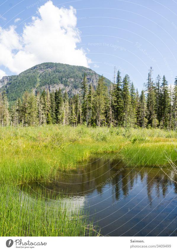 Bergsee Gras sehen bergsee Bäume Landschaft Ausblick Wasser Spiegelung Natur Farbfoto Himmel wolken blau Grün natürlich wandern Amerika