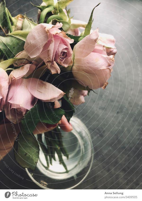 Vertrocknete Rosa Rosen werden aus der Vase genommen rosa Blumenstrauß Natur Farbfoto Dekoration & Verzierung Hintergrundbild Vogelperspektive Feste & Feiern