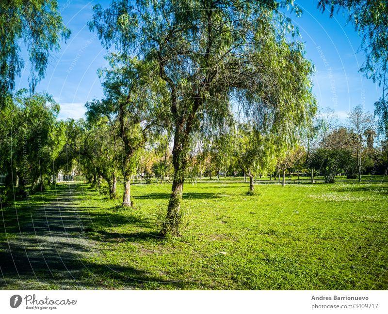 Blick auf sehr grüne Bäume und Gras in einem Park von Puerto de Sagunto Landschaft Frühling Rasen Ebene Baum Ernte Garten Ansicht Himmel Horizont Grasland Szene
