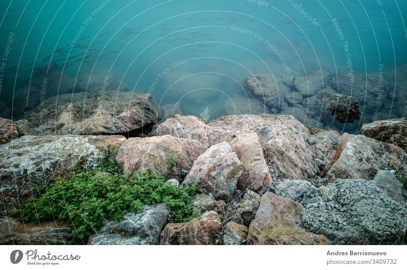 Fische, die in der Nähe der Felsen schwimmen im Freien Tiere Küste Tauchen von Schwänen Meer blau Wasser Fische suchen Enten beim Schwimmen schwarze Enten