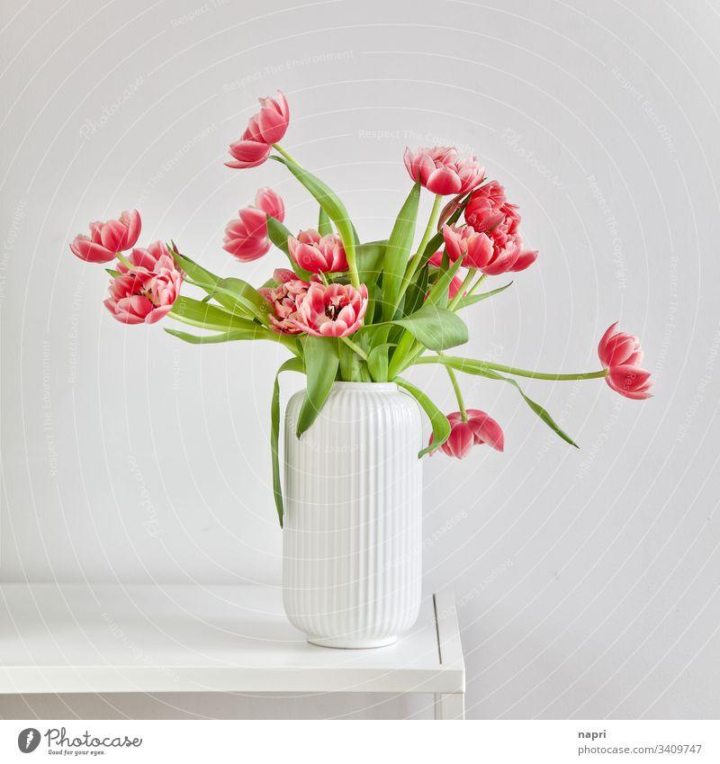 Üppiger Blumenstrauß mit gefüllten pinkfarbene Tulpen in weißer Vase vor weißem Hintergrund Frühling rot üppig schön blühend leuchtende Farben grün Menschenleer