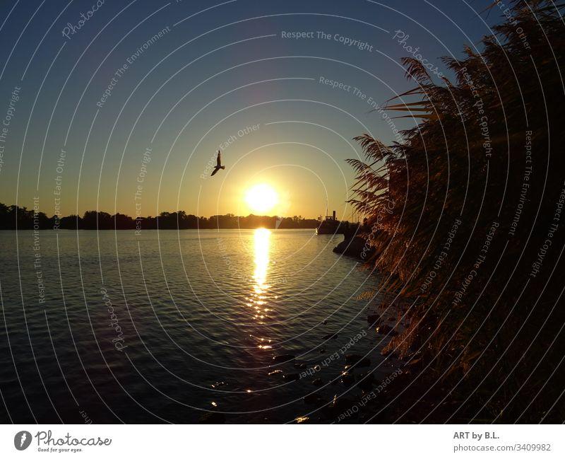 An der Elbe bei Lauenburg fluß wetter sonne sonnenuntergang vogel möwe schilf dämmerung abend Wasser Außenaufnahme Schönes Wetter Sonne Farbfoto Sonnenlicht