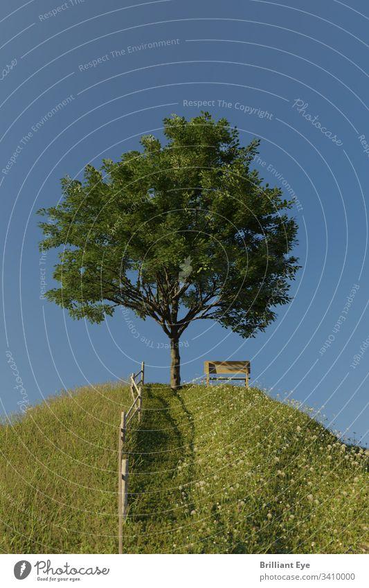 Buche neben einer Holzbank auf einem hohen grünen Hügel Baum Weg Ländliche Szene szenische Darstellungen Stille Hintergründe idyllisch Ruhe Laufsteg Hintergrund
