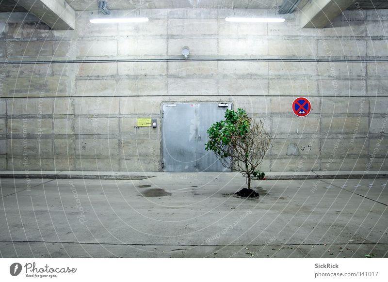 Natur Erde Pflanze Baum Menschenleer Architektur Mauer Wand alt Blühend dehydrieren Wachstum ästhetisch grau grün Verbotsschild Parkhaus Beton Betonwand
