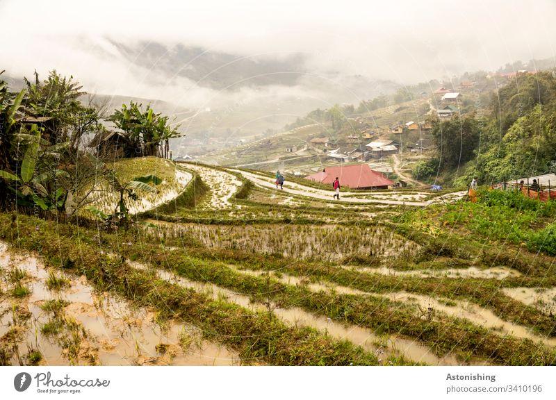 Reisterrassen in Sapa, Vietnam Reisanbau Ernährung Lebensmittel Farbfoto Asien nass Pflanzen Landwirtschaft Linien Nebel Wetter Nässe Wolken Tal hinunter Dorf
